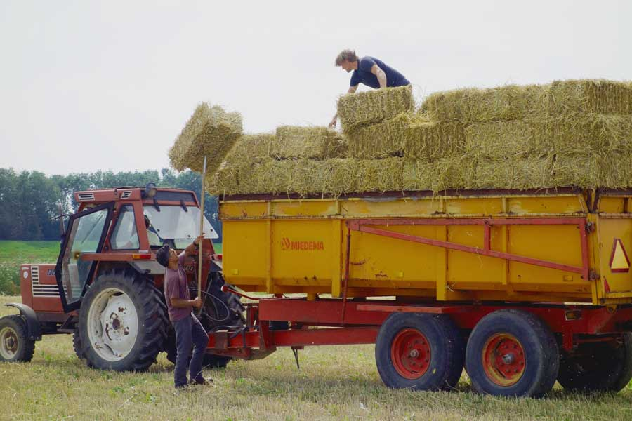 strobalen oogst Buytenhof 2015